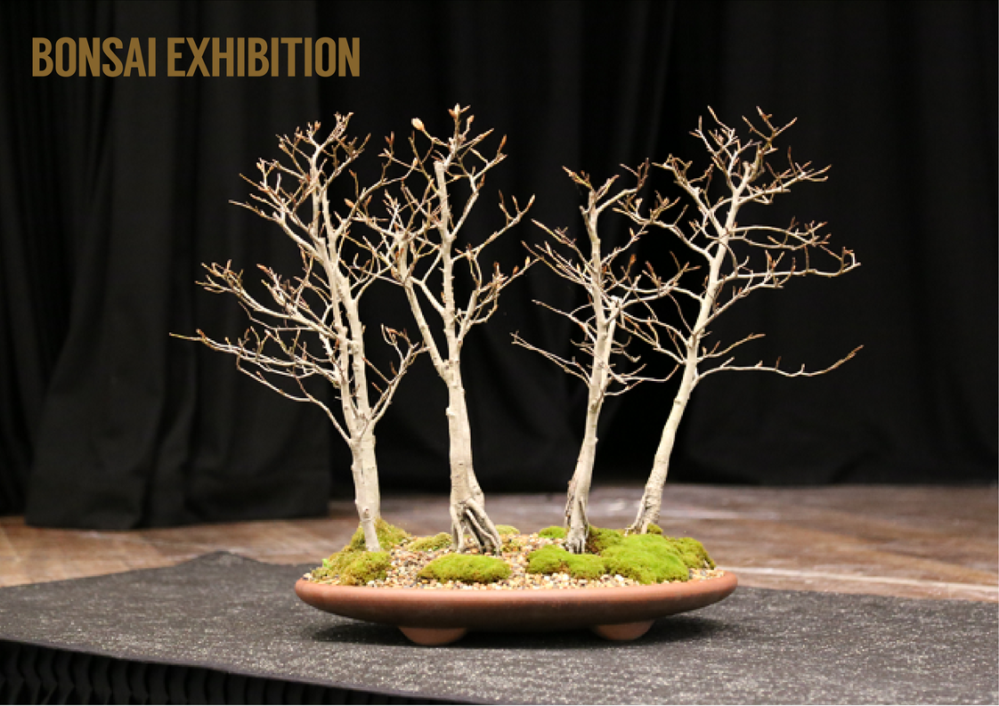 2018 Bonsai Expo
